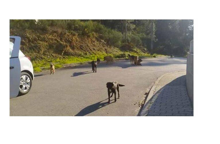 PAN Braga questiona Câmara de Cabeceiras de Basto sobre políticas de bem-estar animal
