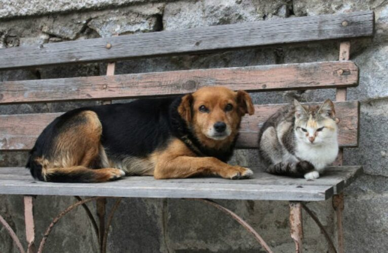 Ribeira de Pena promove Campanha de Esterilização de Animais de Companhia